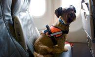 Перевозка животных в самолетах авиакомпании Ямал