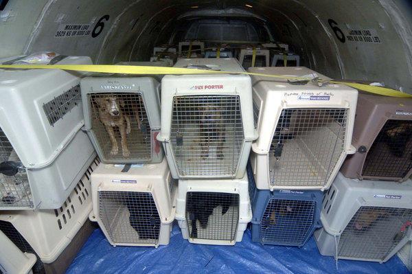 провоз животных в грузовом отсеке
