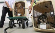 Правила перевозки животных в салоне самолетов авиакомпании S7 Airlines