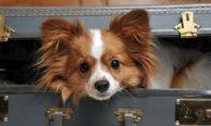 Перевозка животных в самолетах авиакомпании Победа: правила и тарифы