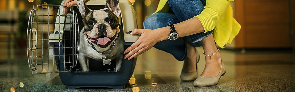 правила перевозки животных на борту самолета