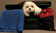 Перевозка собак в самолетах Аэрофлота — все особенности